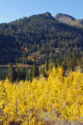 Fall color on Carson Pass, CA